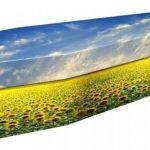 funerals-totnes-devon-coffins-cardboard-sunflower